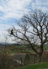Baumpflege  #2 - Eiche, Baumpflege, Baumpfleger, anseilen, Sicherheit, Baum, Ast, klettern, schneiden, sägen
