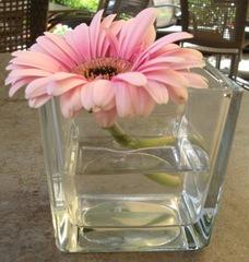 Brechung #1 - Reflexion, Brechung, Lichtbrechung, Spiegelung, Totalreflexion, Physik, Vase, Gerbera, Blume, Volumen, Rauminhalt, Oberfläche, Glas, Dichte, Mathematik