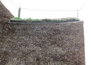 Grassodenfirst - Architektur, Baumaterialien, Reetdach, Dachbedeckung, First, Blitzschutz, Firstgestaltung