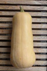 Butternut-Kürbis - Kürbis, Gartenpflanze, Kürbisgewächs, Gemüsekürbis, Gartenkürbis, Butternut