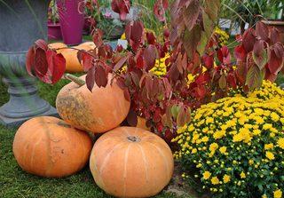Herbstgestaltung - Herbst, Kürbisse, Kürbis, Pflanzen, bunt, gestalten, Dekoration, Stillleben, Jahreszeit, herbstlich, September, Oktober, Stimmung