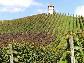 Weinberg - Wein, Weinanbau, Weinstock, Weinreben, Weinberg, Landwirtschaft, Sonne, Hang, Perspektive, Fluchtpunkt