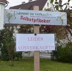 Unkraut zu verkaufen - Schild, Hinweisschild, Tafel, Aufschrift, Information, Schreibanlass