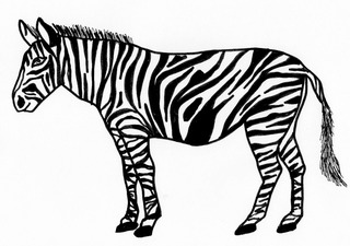 Zebra - Zebra, Streifen, Tarnung, Afrika, Steppe, Anlaut Z, Wörter mit b, schwarz, weiß, Muster, gestreift, Mähne, Huf, Zoo