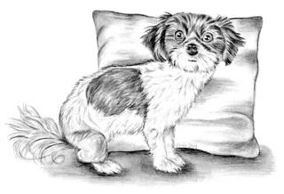 Oreo - Hund, Biyok, Haustier, Tier, Rassen