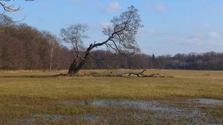 Umgestürzter Baum - Meditation, Schreibanlass, Vergänglichkeit, Totholz, Baum, umgestürzt, Bruch, Wiese, Wald, Waldrand, Windbruch, Baumstamm, Veränderung