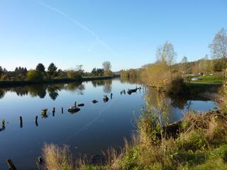 Renaturierung am Neckar - Renaturierung, Rekultivierung, rekultivieren, nachhaltig, Naturschutz, Landschaftspflege, Landschaftsgestaltung