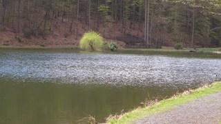 Weide auf einer Insel - Insel, Weide, Wasser, Spiegelung, Wellen, Wegesrand, Meditation, Ruhe, Besinnung