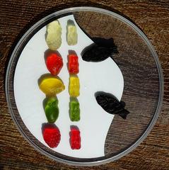 Haribo - Süßigkeiten, Verbraucherbildung, Hauswirtschaftslehre, Zuordnung, Mathe, Mathematik, Geschmack, Geschmacksrichtung, Weingummi, Haribo, Farbe, Farben