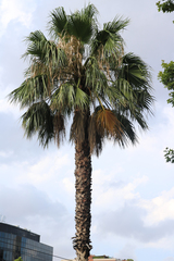 Palme - Palme, Pflanze, Wedel, Urlaub, Gewächs