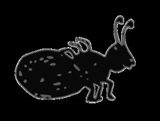 Ameise - ant, Ameise, Insekt, Wald, Anlaut A, Wörter mit ei, Einzahl, Singular, lautgetreu