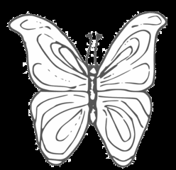 Schmetterling - butterfly, Schmetterling, Falter, fliegen, Anlaut Sch, Illustration, Symmetrie, symmetrisch, Wörter mit Doppelkonsonanten