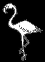 Flamingo - flamingo, Flamingo, Vogel, Schnabel, Seihschnabel, Wasservogel, Anlaut F