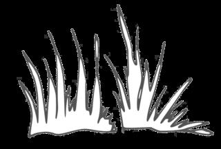 Gras - grass, Gras, Grashalm, Wiese, Grassode, Boden, Anlaut G, Pflanze, Halm, Natur, Garten, Halme, Büschel, Grasbüschel, Rasen