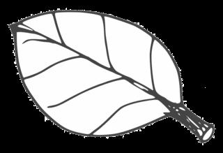Blatt - leaf, Blatt, Blätter, Pflanzen, Pflanzenteile, Herbst, Baum, Anlaut B, Wörter mit ä