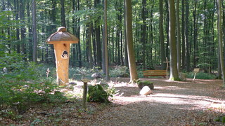 Bestattungswald 01 - Friedhof, Grab, Gräber, Wald, vergänglich, Gesprächsanlass, Meditation, letzte Ruhe, Tod, sterben, Bestattungswald, terra levis, Kreuz, Kanzel