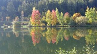 Herbstimpressionen 03 - Herbst, Jahreszeit, See, Stille, Ruhe, Meditation, See, Spiegelung, bunt, Gesprächsanlass, Verfärbung