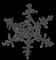 Schneeflocke - snowflake, Schneeflocke, Schneestern, Schneekristalle, Eiskristalle, schneien, Winter, winterlich, Schnee, kalt, Eis, Einzahl, Singular, Eiskristall, Schneekristall, Anlaut Sch