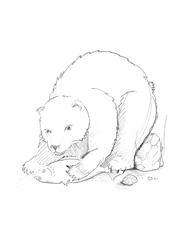 Bär - bear, Bär, Tier, braun, wild, Zoo, Wildtier, Wörter mit ä, Anlaut B, Braunbär, Eisbär, Illustration