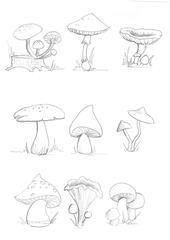 Pilz - Pilz, Pilze, Wald, Handzeichung, heimisch, mushroom, Sammlung, mehrere, viele, suchen, Anlaut P, Wörter mit z, Schwammerl