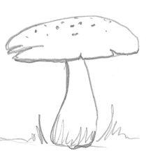 Pilz - Pilz, Pilze, Wald, Handzeichung, heimisch, mushroom, einzeln, Anlaut P, Wörter mit z