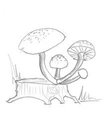 Pilz - Pilz, Pilze, Wald, Handzeichung, heimisch, mushroom, einzeln, Baumstumpf, Anlaut P, vier, Wörter mit z