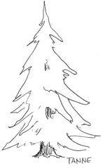 Nadelbaum - Baum, Anlaute T, Wald, Handzeichung, heimisch, Tanne, Nadelbaum, Weihnachtsbaum