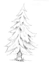 Tannenbaum - Baum, Anlaute T, Wald, Handzeichung, heimisch, Tanne, Nadelbaum, Weihnachtsbaum