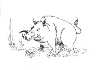 Wildschwein/Warzenschwein - Tier, Säugetier, Keiler, braun, wild, Zoo, Wildtier, Wild, Anlaut W, Wildschwein, wild boar, Wald, Handzeichung, heimisch