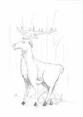 Hirsch - Tier, wild, Zoo, Wildtier, Anlaut H, Hirsch, Doe, Wald, Handzeichung, heimisch, Geweih, Wild