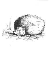 Igel - Tier, wild, Zoo, Wildtier, Anlaut I, Igel, Hedgehog, Wald, Handzeichung, heimisch, stachelig, Säugetier, Stacheln, stachelig, Illustration