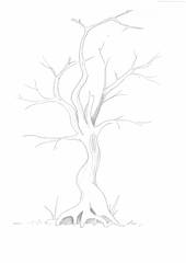 Baum - Baum, Anlaute B, Wald, Handzeichung, heimisch, Laubbaum, laubfrei, Winter, Stamm, Ast, Äste, kahl