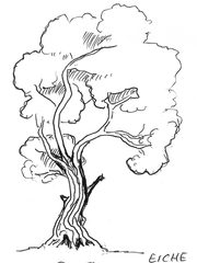 Baum - Baum, Anlaut B, Wald, Handzeichung, heimisch, Laubbaum, Stamm, Äste, Ast