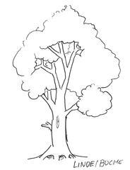 Baum - Baum, Anlaut mit B, Wald, Handzeichung, heimisch, Laubbaum, Ast, Stamm, Krone