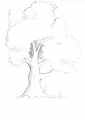Baum - Baum, Anlaut mit B, Wald, handzeichung, heimisch, Laubbaum, Krone, Stamm, Ast