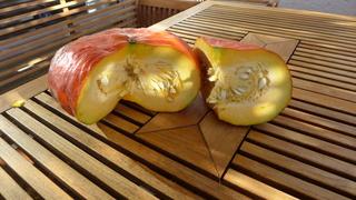 Kürbis - roter Zentner #3 - Kürbis, Gartenpflanze, Pflanze, Kürbisgewächs, Gemüsekürbis, Gartenkürbis, Herbst, Cucurbita maxima, Speisekürbis