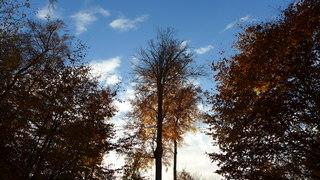 Herbstimpressionen - Herbst, Bäume, Natur, Ruhe, Ernte, Rinde Blätter, Herbst, Laub, Laubfall, Herbstlaub, herbstlich, Jahreszeiten, Vergänglichkeit, Schreibanlass, Meditation