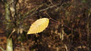 Herbstblatt - Herbstfarben, Herbst, Blattfärbung, Herbstlaub, Laub, Blätter, bunt, Jahreszeit, Impression, Meditation, Hintergrund, Stimmung, Farbenspiel, Farbe