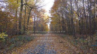 Herbst -  L'Automne - Herbst, Wald, Blätter, bunt, Jahreszeit, Meditation, Schreibanlass, Prevert