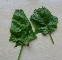 Spinat - Spinat, Blatt, Spinatblaetter, Gemüse, grün, Gemüsespinat, Gartenspinat, Blattgemüse, Heilpflanze
