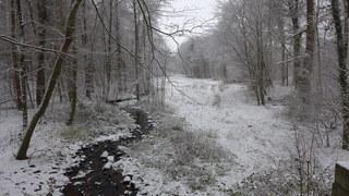 Winterstimmung #1 - Winterlandschaft, Winter, Schnee, kahle Bäume, Schneelandschaft, Kälte, Einsamkeit, Ruhe, Stille, Schreibanlass, Meditation, trüb, wolkig, Bach, Bachlauf