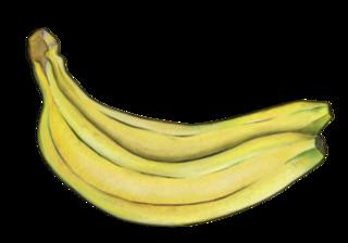 Bananen - Banane, Bananen, Obst, Frucht, Südfrucht, Nahrung, gelb, exotisch, essbar, Anlaut B