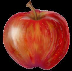 Apfel - Apfel, Obst, Frucht, Kernobstgewächs, Rosengewächs, rot, Anlaut A, Wörter mit pf, Illustration