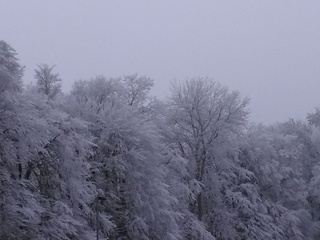 Winteridylle  - Winter, Bäume, Weg, Meditation, Ruhe, Reif, Raureif
