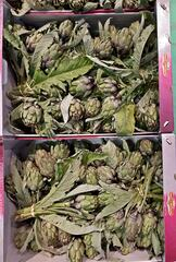Artischocken - Artischocke, Kulturpflanze, distelartig, Korbblütler, Schuppenblätter, Blütengemüse, Heilpflanze, Kisten, Arzneipflanze, artichot