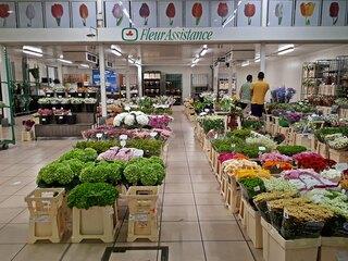 Pariser Großmarkt Rungis - Blumen - Blumenhalle, Paris, Großmarkt, Rungis, französisch, Frankreich, France, Blumen