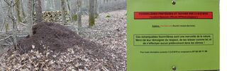 Ameisenhaufen - fourmilières, fourmis, protection, nature, merveille, dômes, respect