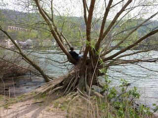 Leseplatz im Baum - lesen, klettern, Natur, sitzen, Frühling, Hobby, Entspannung, entspannen, Lesespass, Lesefreude, Zeitung, Lesart, Baumsitzer