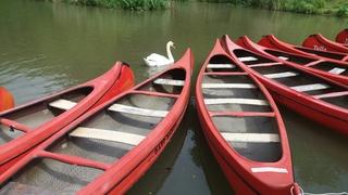 Padelboote mit Schwan - Paddelboot, Schwan, Wasser, Wasserfahrzeug, Freizeitsport, Boot, Kanu
