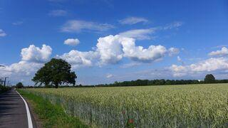 Himmel - Himmel, Sommer, Wolken, Korn, Feld, Radweg
